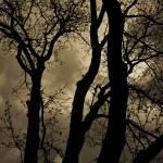 """spring sky"" by poetryoflight"