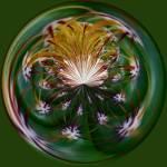 """Amazing Circle 66 - Cactus Spines"" by DSainton"