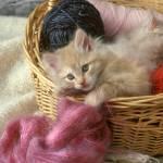 """Kitten in the Yarn Basket"" by Degginger"