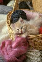 Kitten in the Yarn Basket