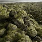 """Moss Covered Lava Flow - Iceland"" by Degginger"