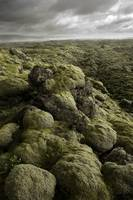 Moss Covered Lava Flow - Iceland