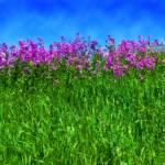 """""""Meadow Flowers"""" by jimstirtzinger"""