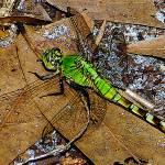 """Dragonfly"" by 4wbiw"