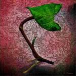"""""""Green leaf"""" by deedemigjorn"""