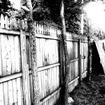 """Trees and Fence"" by mcarvinphoto"