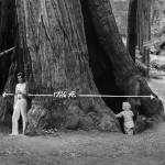 """Father and Son, Muir Woods,  c1920"" by worldwidearchive"