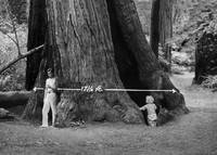 Father and Son, Muir Woods,  c1920 by WorldWide Archive