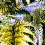 """Ferns"" by amythomas"