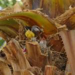 """Bird Feeding Chicks"" by ENKPHOTOGRAPHY"