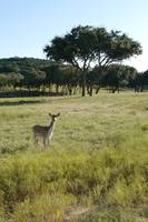Fossil Rim Animal Safari: Glen Rose, TX