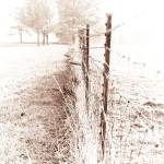 """FENCE 7-1"" by amsphotography"