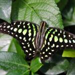 """""""butterfly on a leaf"""" by candicecruzphotography"""
