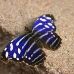 """blue butterfly"" by candicecruzphotography"