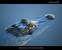 Danger In the Water
