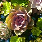 """Succulent Pond 3"" by AmyVangsgard"