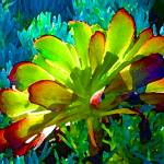 """Succulent Backlit on Blue 1"" by AmyVangsgard"