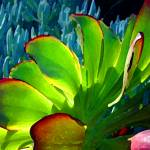 """Succulents Backlit on Blue 5"" by AmyVangsgard"
