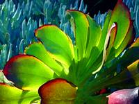 Succulents Backlit on Blue 5
