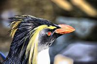 Bayworld Rockhopper Penguin