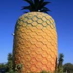 """Big Pineapple"" by richardbaak"