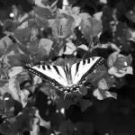 """Flutter By"" by EliTynan"