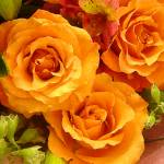 """Bouquet of Orange Roses Square"" by AmyVangsgard"