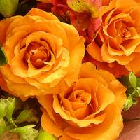 Bouquet of Orange Roses Square