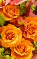 Bouquet of Orange Roses Tall