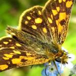 """""""Papillon aux ailes déployés"""" by exprime_toi"""