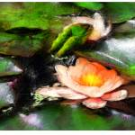 """Water Lily"" by mcniff"