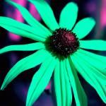"""""""Psychedelic Flower"""" by SteveWalton"""