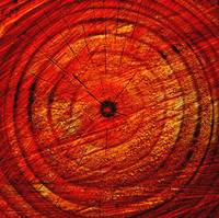 Universe According to  Tree Rings