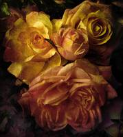 Sunset Rose (large)