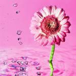 """pink"" by Virgonc"