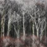"""TreeStand20x40"" by fusionphoto"