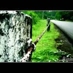 """""""Roadside"""" by gilbertrondilla"""