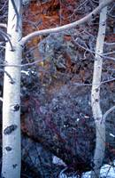 Aspen, Granite and Lichen