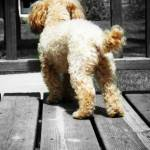 """""""ponderingdog"""" by brittsphotography"""
