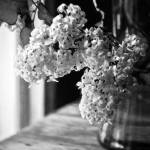 """Monochrome Lilacs"" by karmicRenditions"