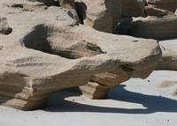 Sculpted Alligator on Coquina Beach