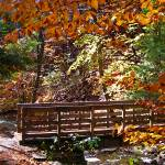 """Bridge at Ricketts Glen"" by LuciaH"