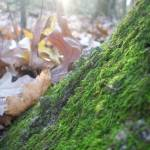 """""""moss"""" by brittsphotography"""