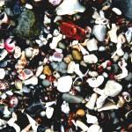 """""""seashells"""" by cornelius"""