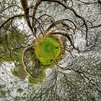 Stereographic Beneath the Trees