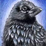 """Black Bird RAVEN Illustration"" by KiniArt"
