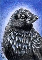 Black Bird RAVEN Illustration
