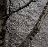 Icebound Forest Detail