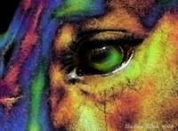 colorful eye1
