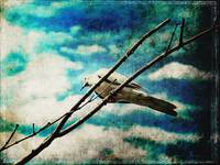 The Bird Who Brightened My Darkening Sky
